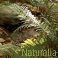 Naturalia Brochure